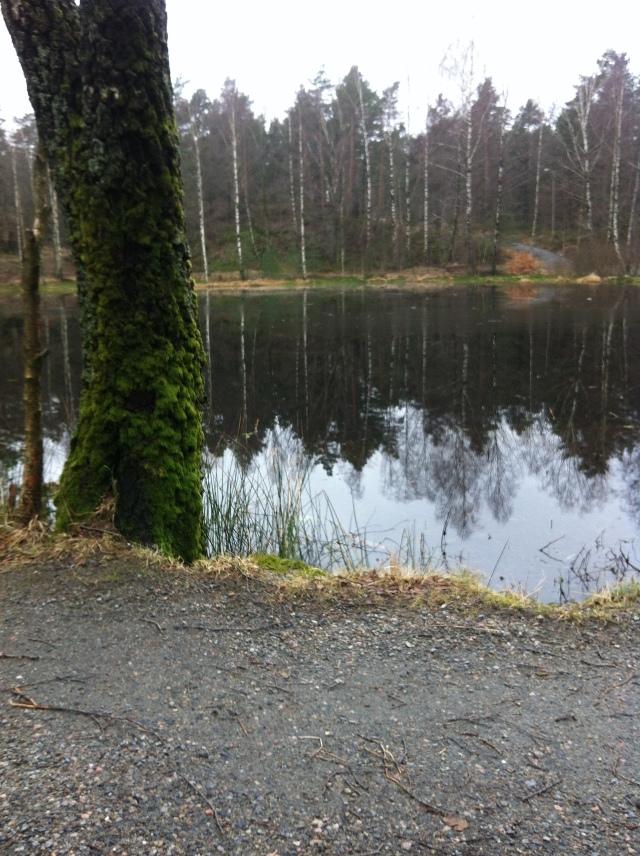Fra Svarttjønn i Baneheia.